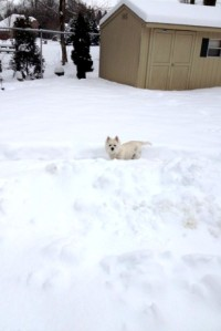 Boo in snow